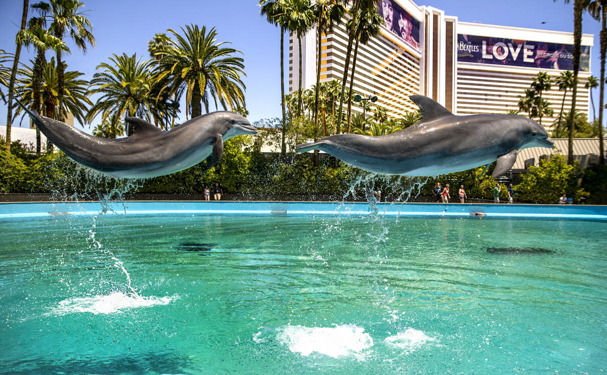 Dolphins leap through the air at the Siegfried & Roy's Secret Garden and Dolphin Habitat at ...