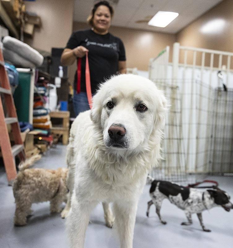 Kiley Esprecion, dog coordinator, walks Casper, at Heaven Can Wait Animal Society, on Thursday, ...