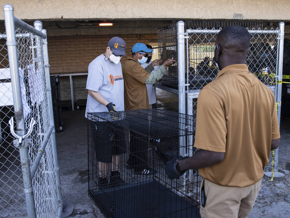 Volunteers place dog kennels into pet holding area at the Courtyard Homeless Resource Center, o ...