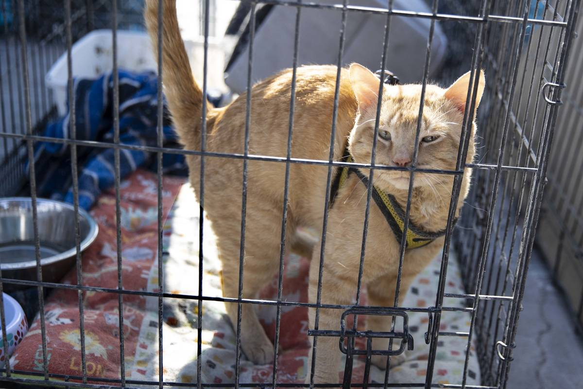 Tigger is seen inside her kennel at the Courtyard Homeless Resource Center, on Friday, May 21, ...
