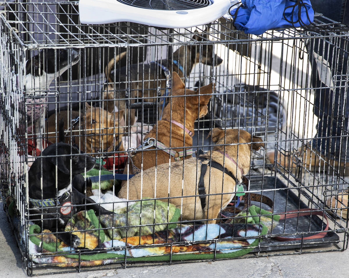 Dogs are seen inside their kennels at the Courtyard Homeless Resource Center, on Friday, May 21 ...