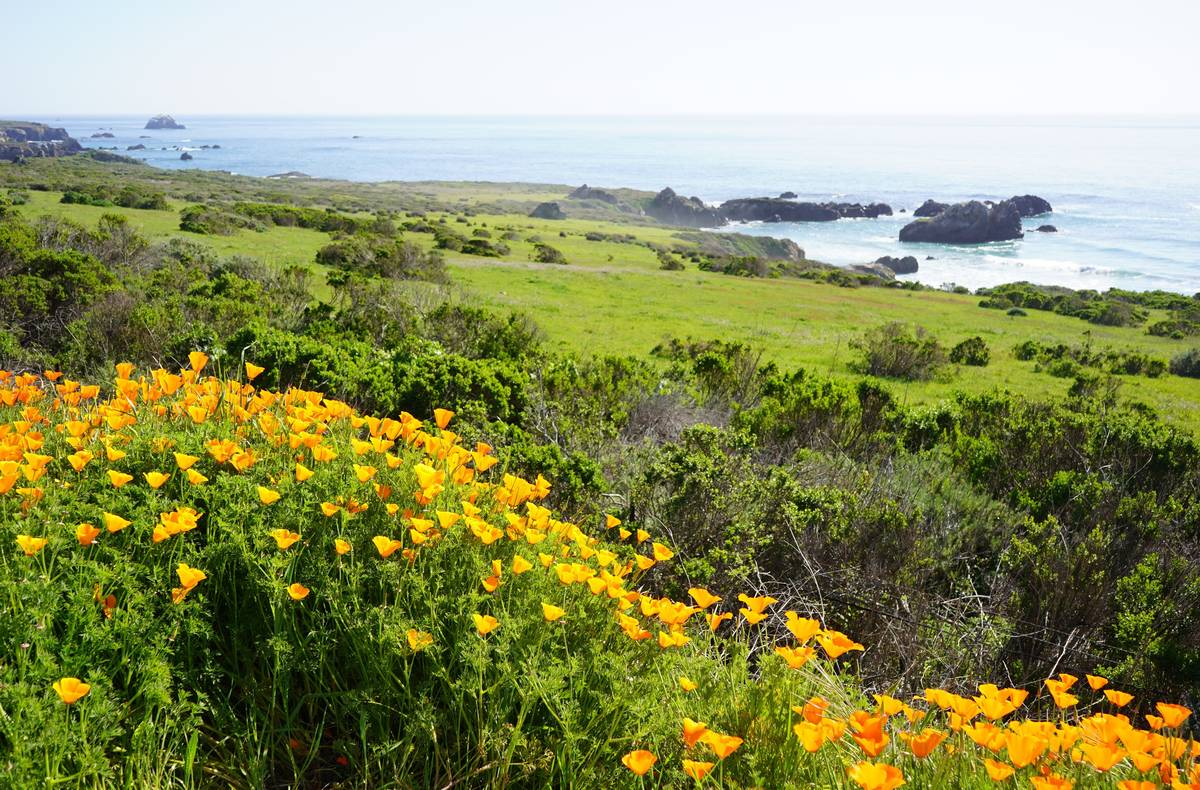 California poppies and Big Sur beauty along Highway 1. (Natalie Burt/Las Vegas Review-Journal)