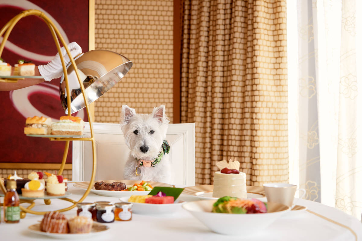 Encore's new dog-friendly resort program includes a doggy dining menu with several meat, fish a ...