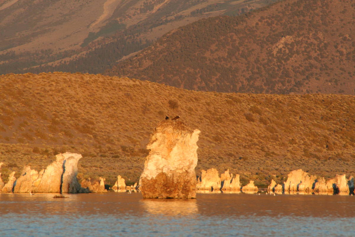Some osprey nest on the tufa towers for safety but need to fly to nearby lakes to fish. (Debora ...