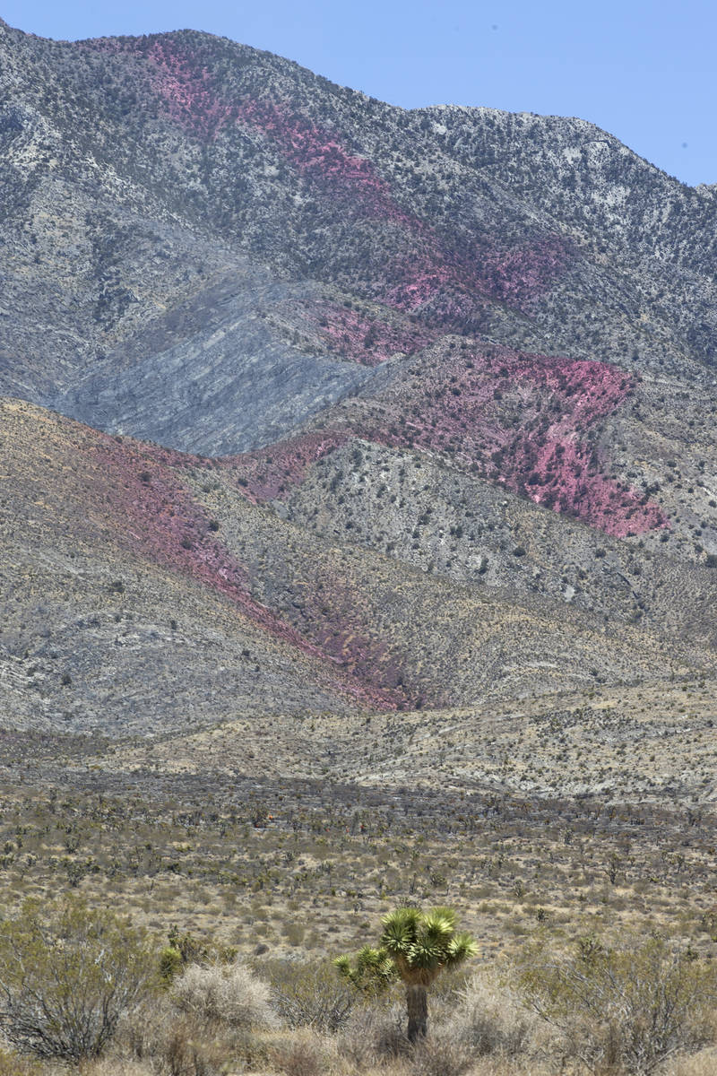 Fire retardant is present on the western slope of Potosi Mountain while crews battle the Sandy ...