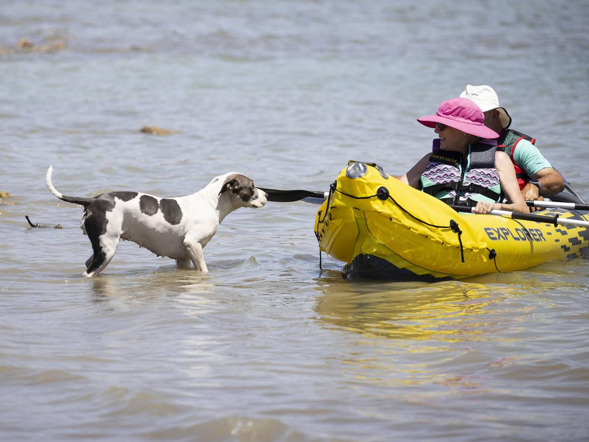 Karma, left, watches as Liz Fraser and her husband J.D., both of Las Vegas, kayak at Boulder Be ...