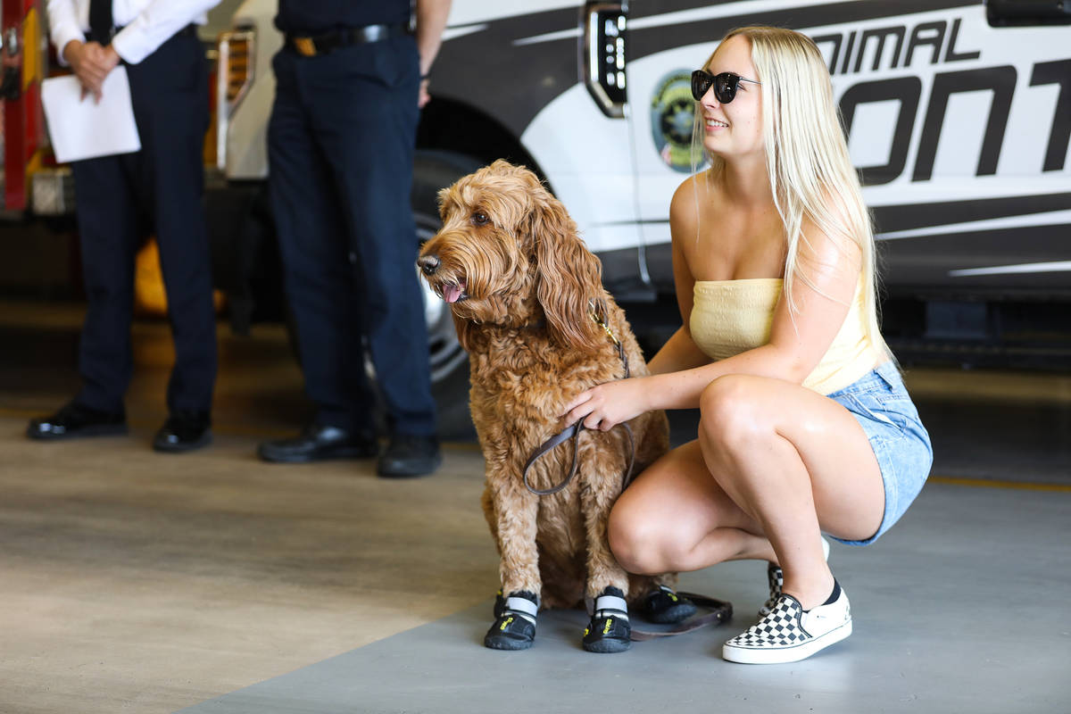 Cameron Lent hangs out with her dog Murphy the golden doodle at an event to teach the public ab ...