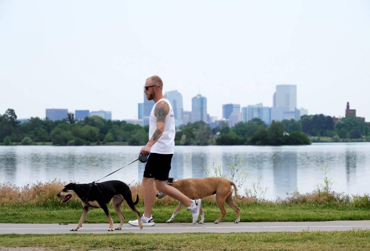 A man walks dogs alongside Sloan's Lake in Denver on Wednesday, June 16, 2021.(AP Photo/Brittan ...