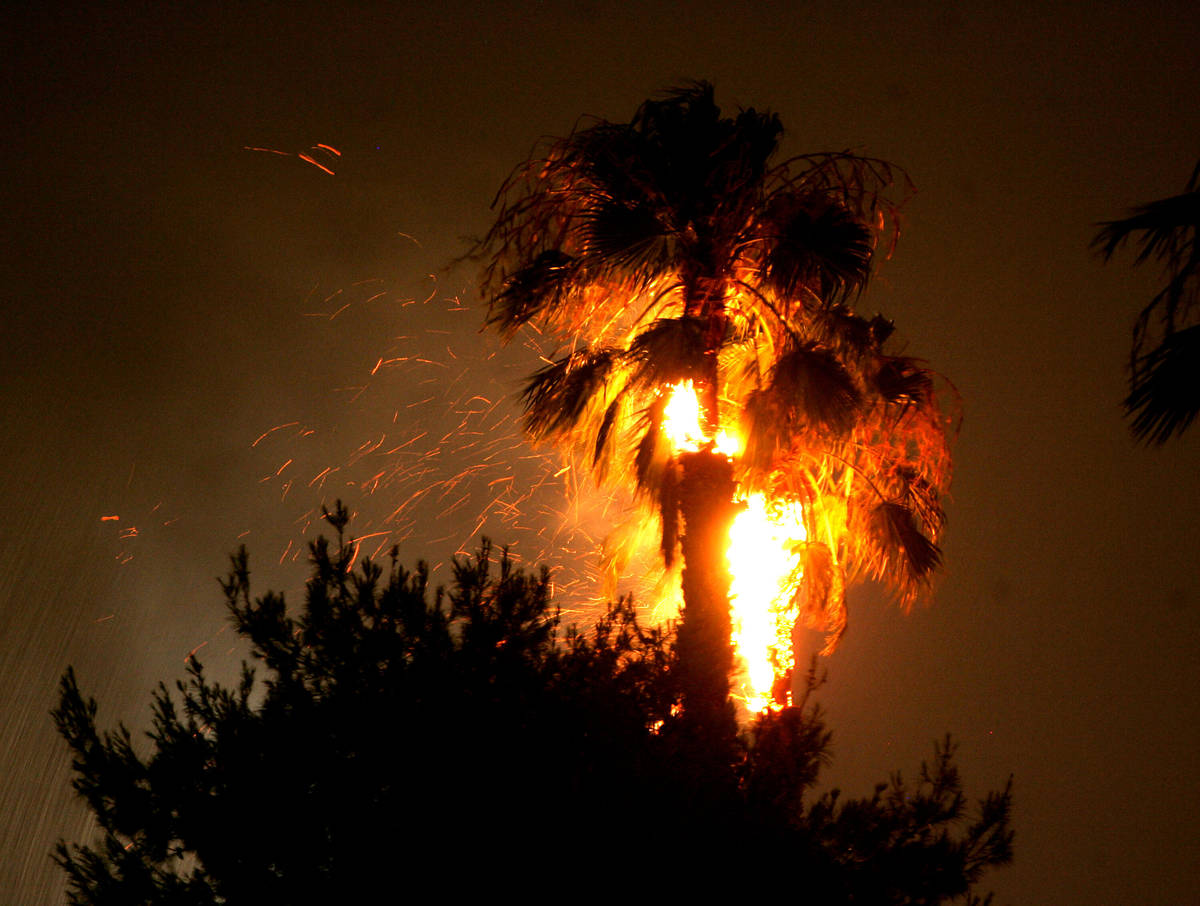 File photo: Flames consume a palm tree near Spencer Street and Reno Avenue after being struck b ...