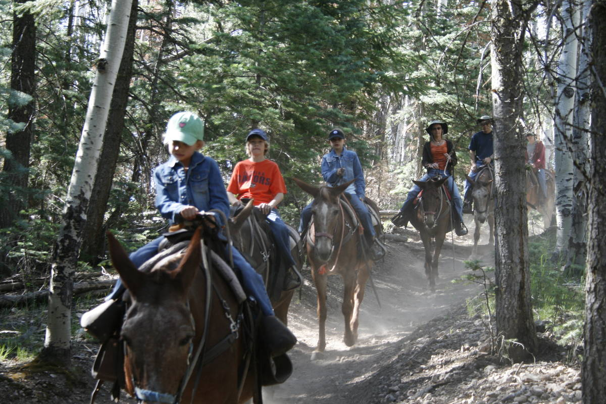 Grand Canyon mule rides offers three different excursions lasting from one to three hours. (Oli ...