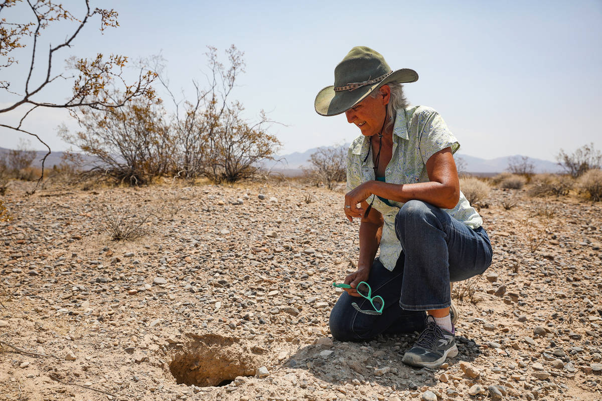 Laura Cunningham shows a desert tortoise burrow near the future Yellow Pine solar project in Cl ...