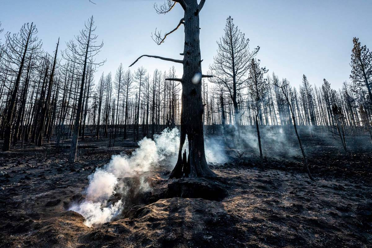Spot fires smolder near trees damaged by the Bootleg Fire on Wednesday, July 21, 2021 in Bly, O ...