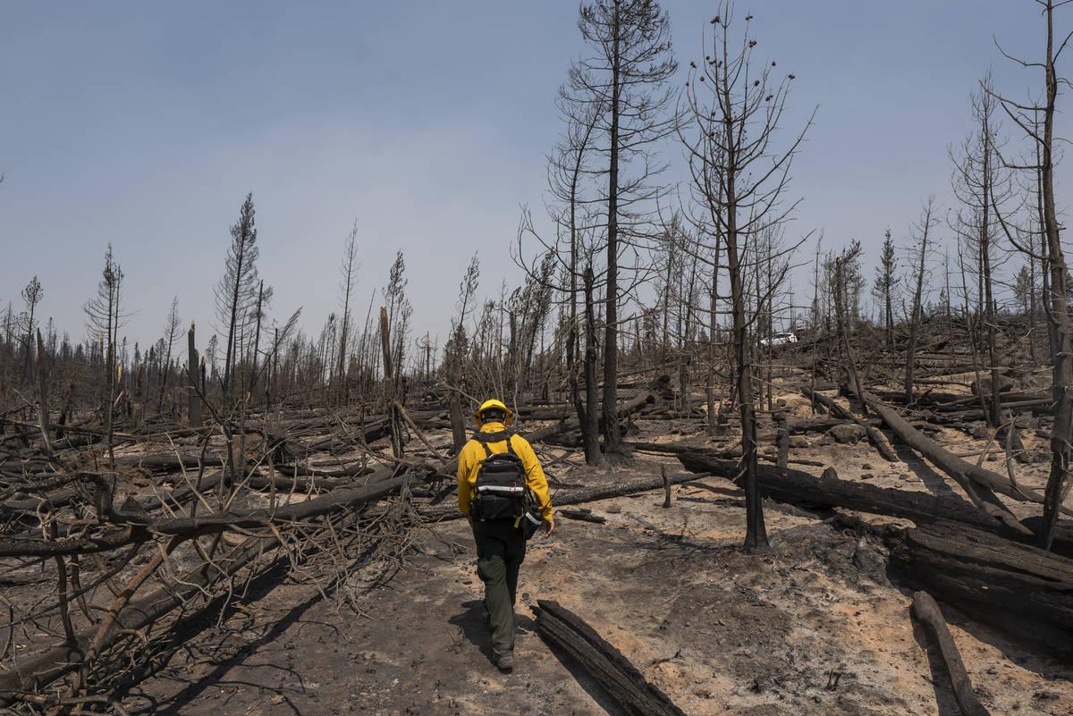 Marcus Kauffman, public information officer with the Bootleg Fire, walks through burn damage ne ...