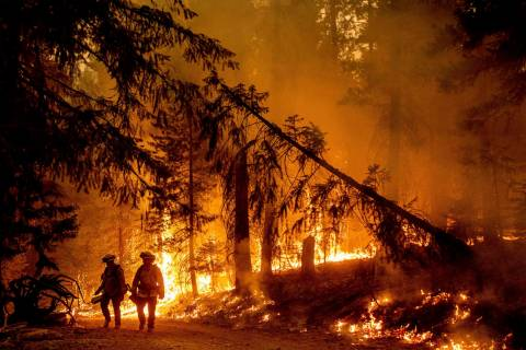 Firefighters light a backfire to stop the Dixie Fire from spreading near Prattville in Plumas C ...