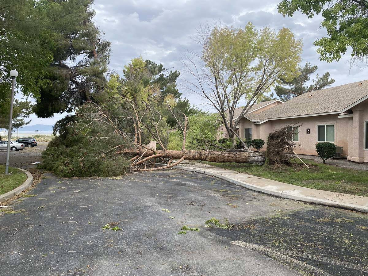 An uprooted tree lies in the street after overnight storms in Pahrump, Monday, July 26, 2021. ( ...