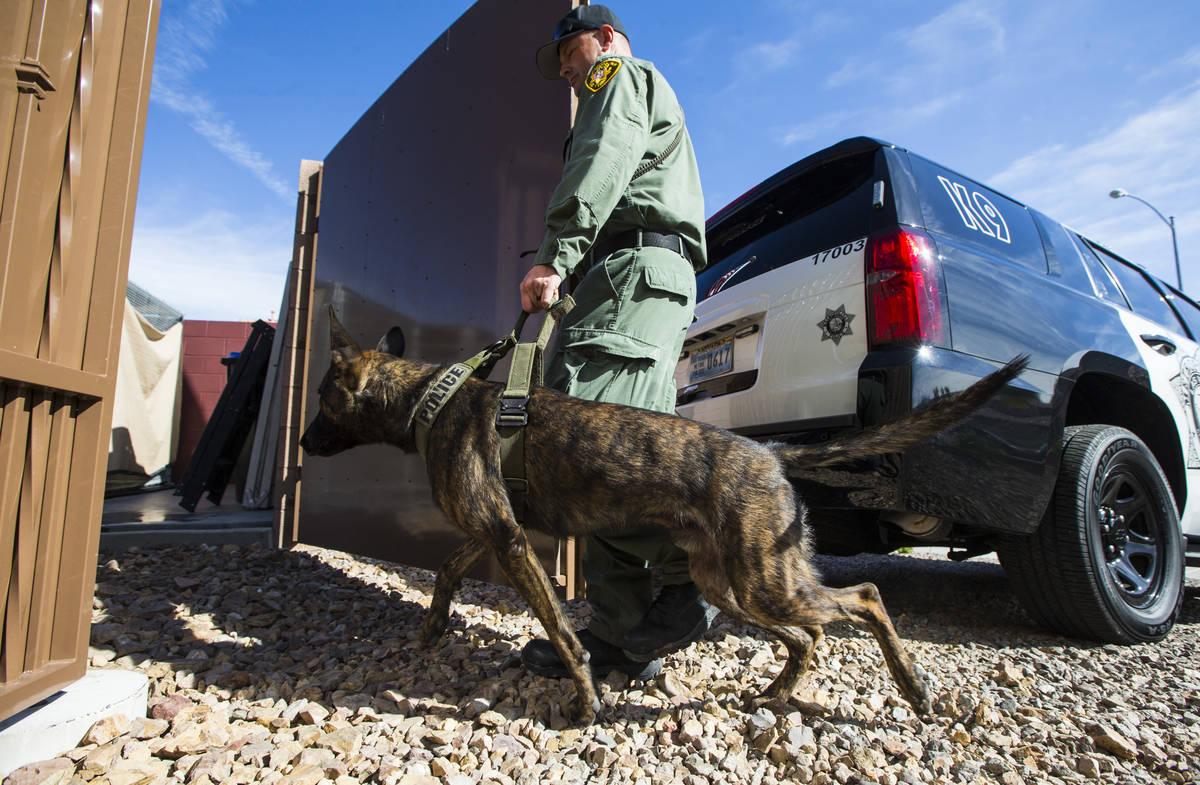 Las Vegas police K9 officer Dukes leads K9 Argos to his kennel in Henderson on Wednesday, Oct. ...