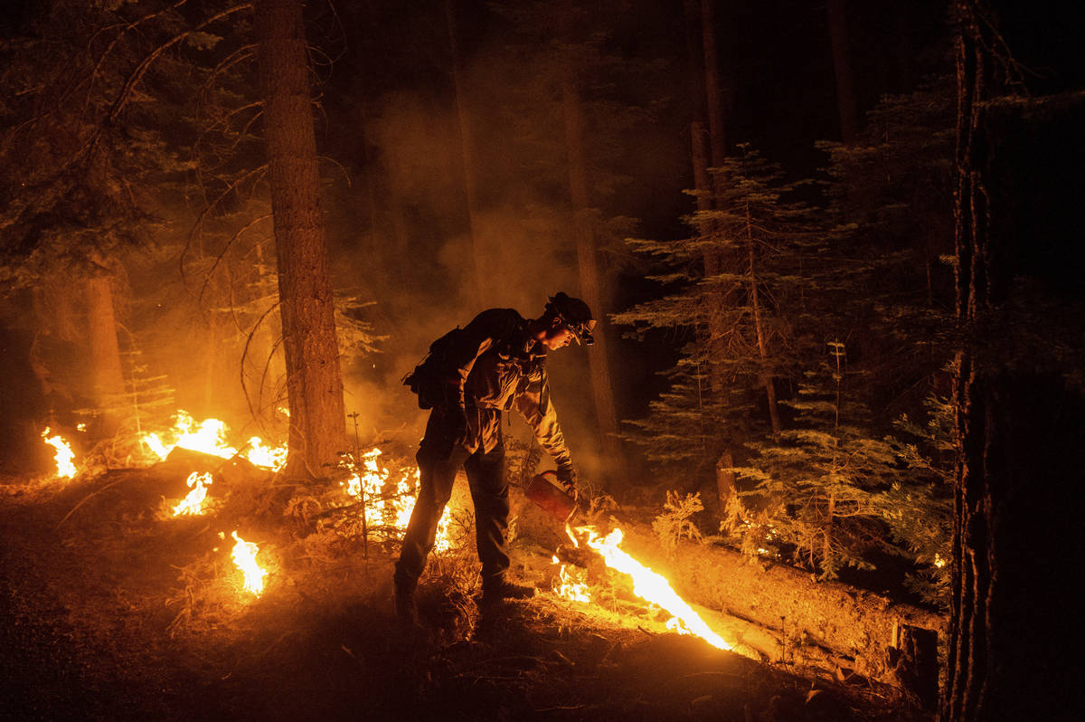 A firefighter uses a drip torch to ignite vegetation while trying to stop the Dixie Fire from s ...