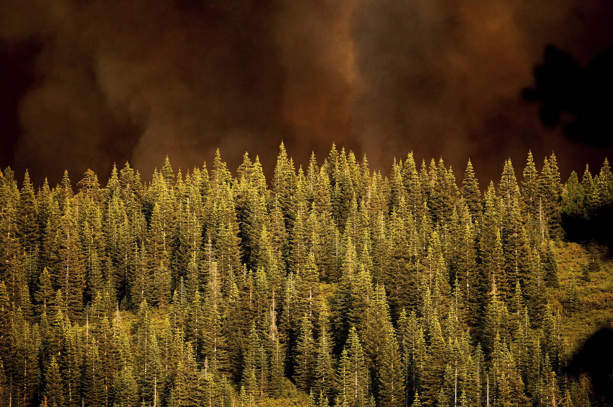 Smoke from the Dixie Fire rises over trees in Lassen National Forest, Calif., near Jonesville o ...