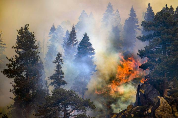 Fire burns amongst the pines on a ridge along SR 89 from the Caldor Fire on Wednesday, Sept. 1, ...