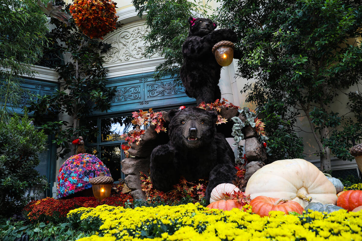 """Bears in the north bed in the autumn exhibit ''Deeper into the Forest"""" is on display until Nov. ..."""