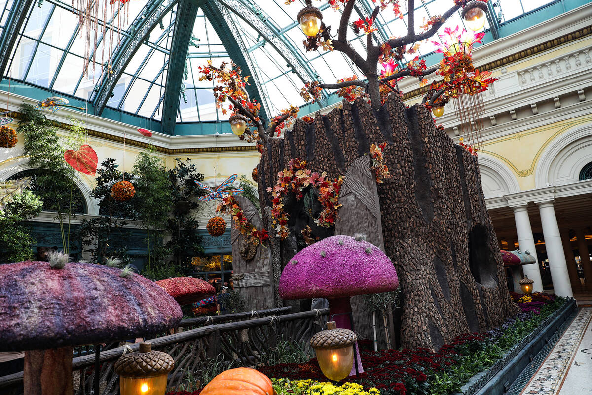 """The tree trunk in the east bed in the autumn exhibit ''Deeper into the Forest"""" is on display un ..."""
