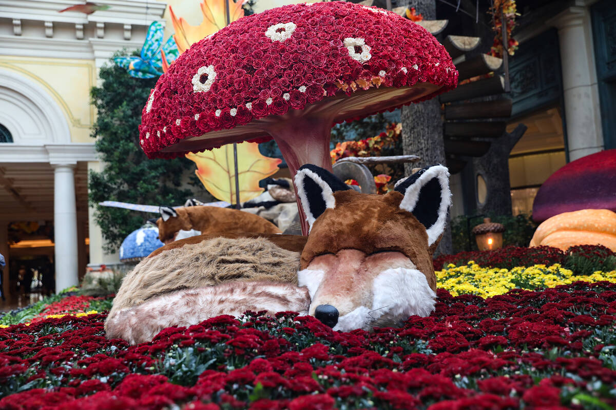 """A fox in the south bed in the autumn exhibit """"Deeper into the Forest"""" is on displ ..."""