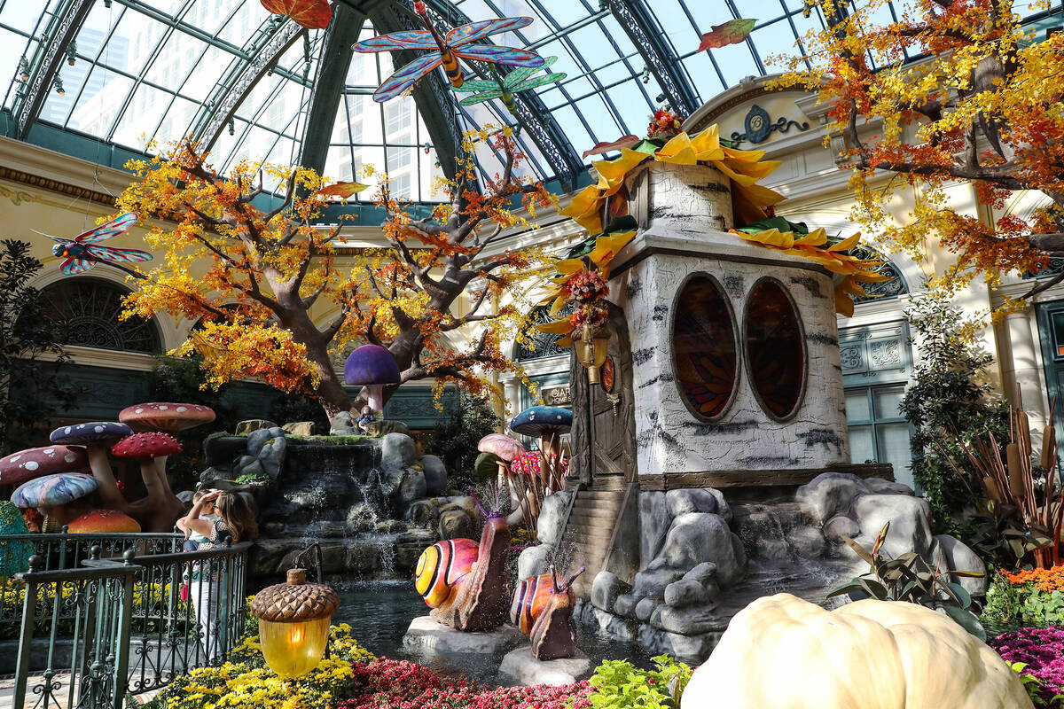 """The west bed in the autumn exhibit """"Deeper into the Forest"""" is on display until N ..."""