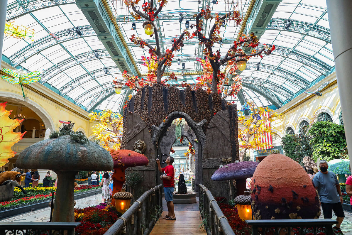 """The east bed in the autumn exhibit """"Deeper into the Forest"""" is on display until N ..."""