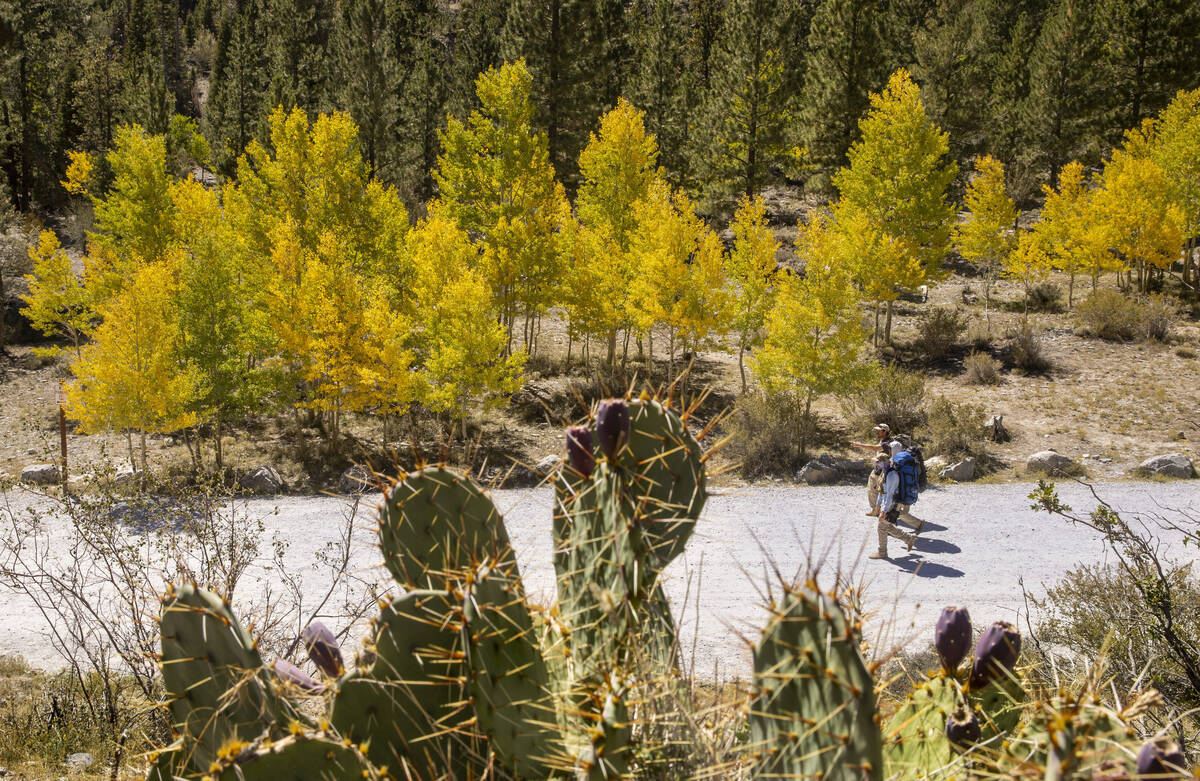 Hikers make their way from the Mary Jane Falls trailhead about colorful Aspens on the first day ...