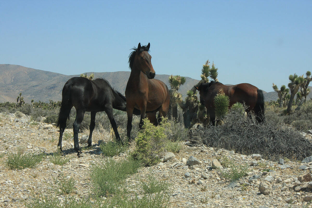 Wild horses can be seen near the property. (Mt. Charleston Realty Inc.)