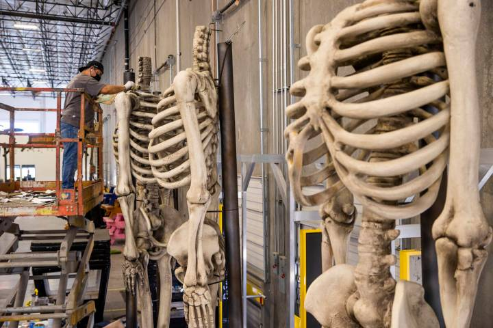 Jose Cardenas paints giant skeleton bodies within the Electric Daisy Carnival warehouse as they ...