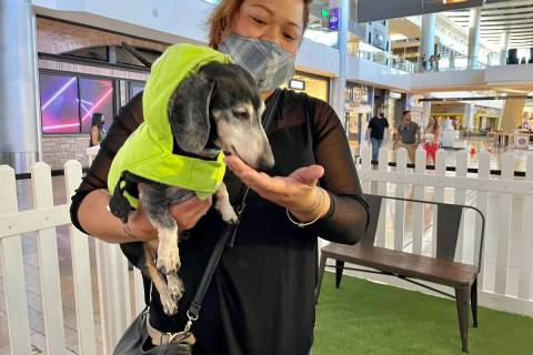Kiley Esprecion, dog coordinator for Heaven Can Wait Animal Society, gives Stewie the dachshund ...