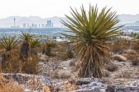 The Las Vegas skyline seen from a vacant field on Saturday, Oct. 9, 2021, in Las Vegas. McCarra ...